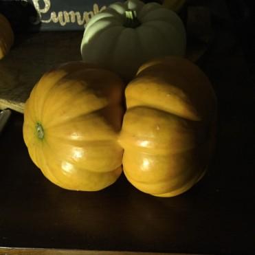 conjoined pumpkin
